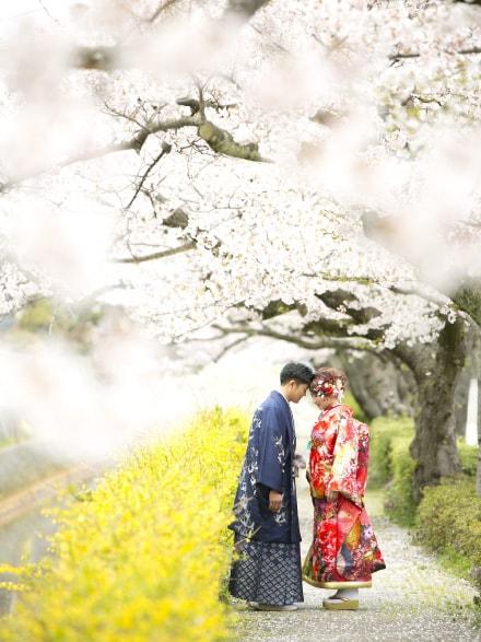 満開の桜と和装のカップル